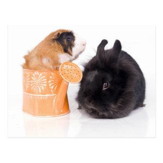 rabbit and guinea pig postcard