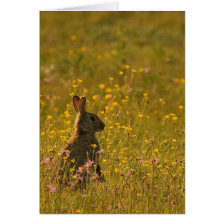 Rabbit At Sunrise, Any Occasion Greeting Card - Wi