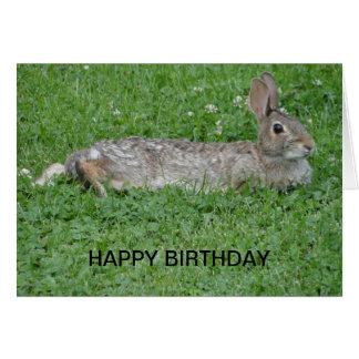 Rabbit, Birthday Greeting Card