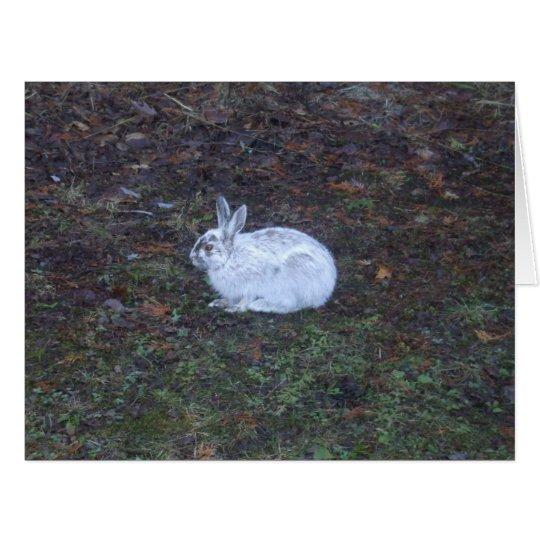 Rabbit Blank Card