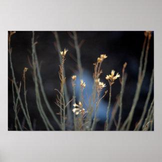 Rabbit Brush Blossoms in Winter Poster
