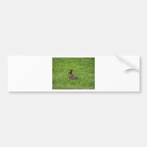 Rabbit Bumper Stickers
