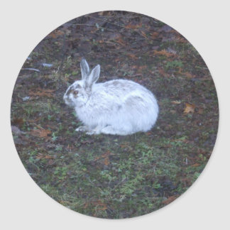 Rabbit Changing Fur Color Classic Round Sticker