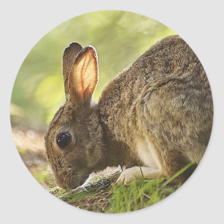 Rabbit Classic Round Sticker