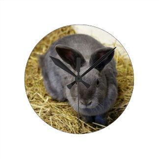 Rabbit Clocks