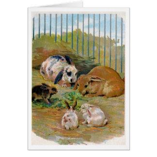 Rabbit Family, Greeting Card