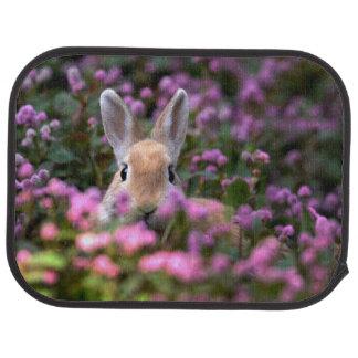 Rabbit farm car carpet