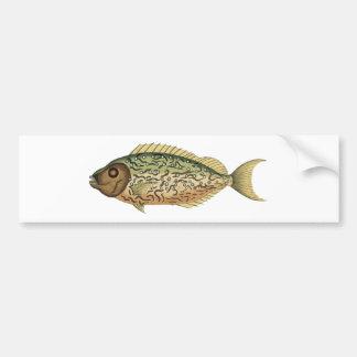 Rabbit Fish Bumper Stickers
