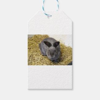 Rabbit Gift Tags