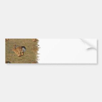 Rabbit Hopping Bumper Sticker