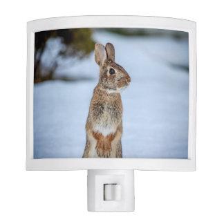 Rabbit in the snow night lites