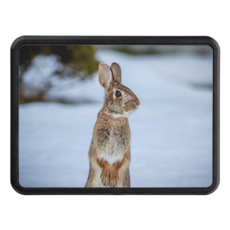 Rabbit in the snow trailer hitch cover