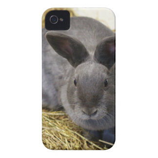 Rabbit iPhone 4 Case