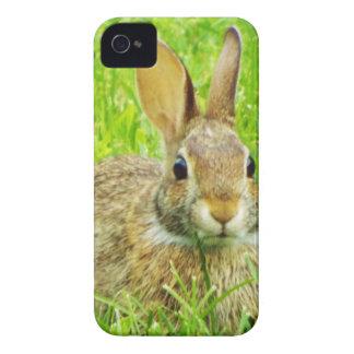 rabbit iPhone 4 Case-Mate cases