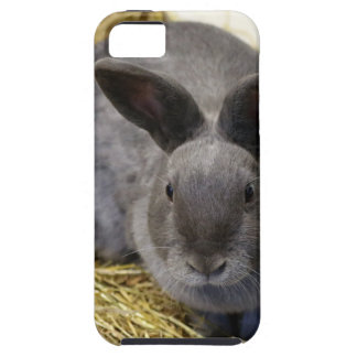Rabbit iPhone 5 Case