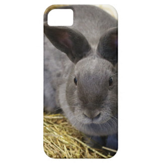 Rabbit iPhone 5 Cases