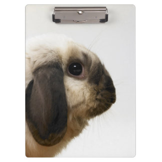 Rabbit looking at rabbit clipboard