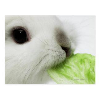 Rabbit nibbling lettuce leaf, close-up postcard