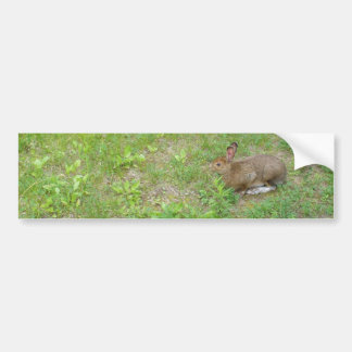 Rabbit on the Alert while having Lunch Bumper Sticker