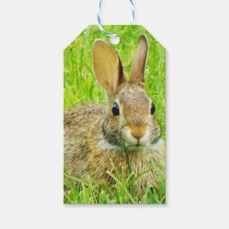 rabbit pack of gift tags
