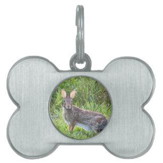 rabbit pet ID tag