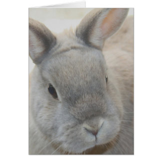 rabbit photographed by Tutti Greeting Card