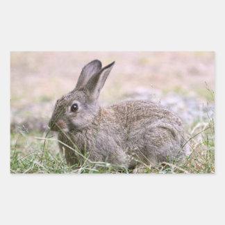 Rabbit Picture Sticker