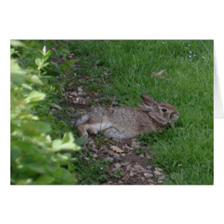 Rabbit Relaxation Card