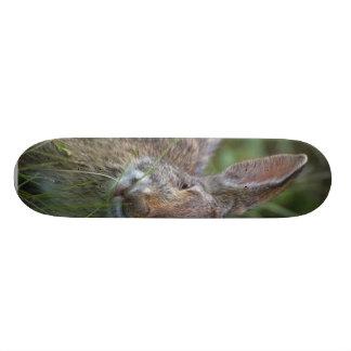 Rabbit Skate Deck