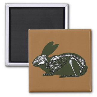 rabbit skeleton magnet