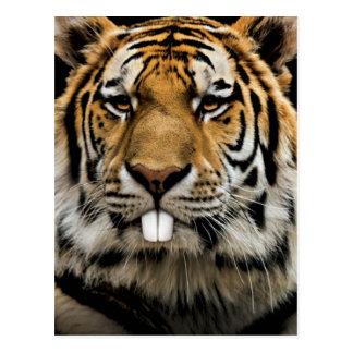 Rabbit tiger - tiger face - tiger head postcard