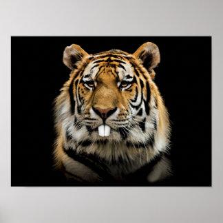 Rabbit tiger - tiger face - tiger head poster
