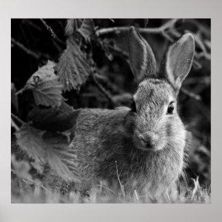 RabbitMono Poster