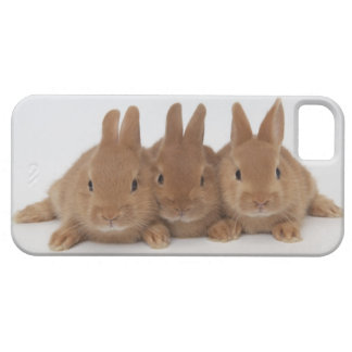 Rabbits.Netherland Dwarfs. iPhone 5 Cover