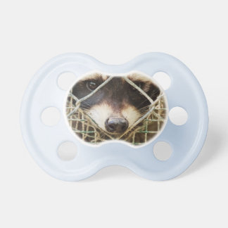 RACCON on Pacifier