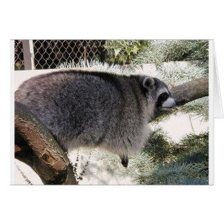 raccoon1 card