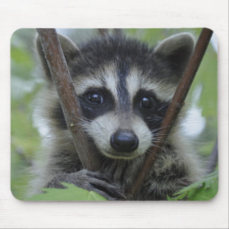 Raccoon - #1005 mouse pad