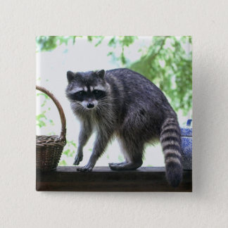 Raccoon and Cookie Jar 2 Inch Square Button