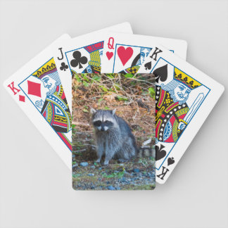 Raccoon at Point Defiance Park WA State Bicycle Playing Cards