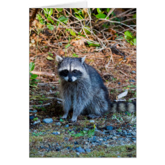 Raccoon at Point Defiance Park WA State Card