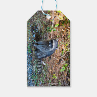 Raccoon at Point Defiance Park WA State Gift Tags