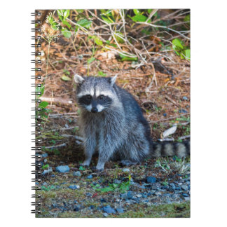 Raccoon at Point Defiance Park WA State Notebooks