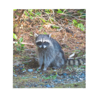 Raccoon at Point Defiance Park WA State Notepad