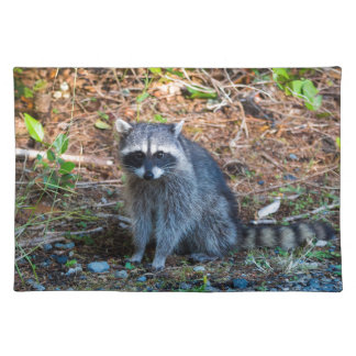 Raccoon at Point Defiance Park WA State Placemat