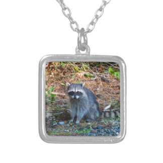 Raccoon at Point Defiance Park WA State Silver Plated Necklace