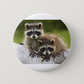 Raccoon Babies 2 Inch Round Button