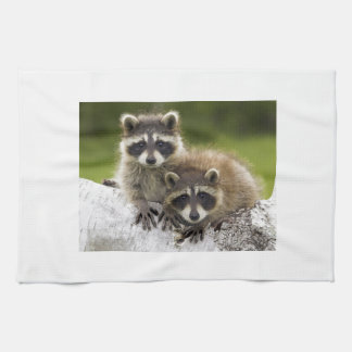 Raccoon Babies Kitchen Towel