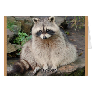 Raccoon Card