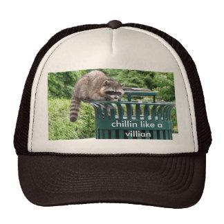 raccoon, chillin like a villian trucker hat