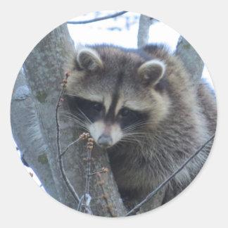 Raccoon Classic Round Sticker